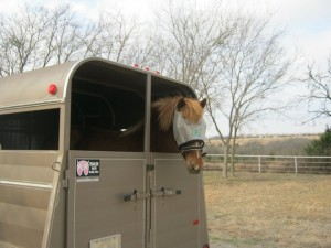 horse riding backwards in the trailer